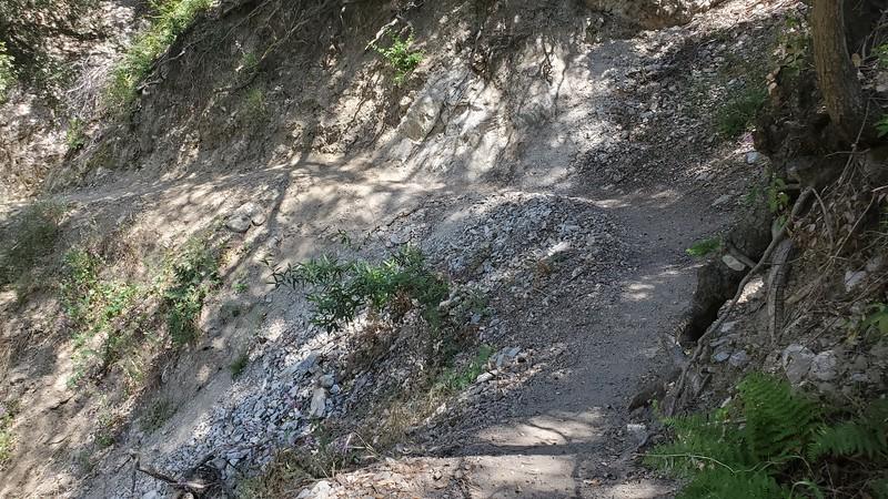 Blue Bug Trail