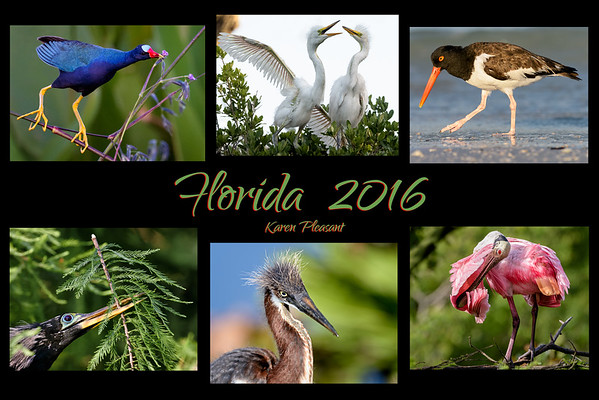 Florida 2016 video