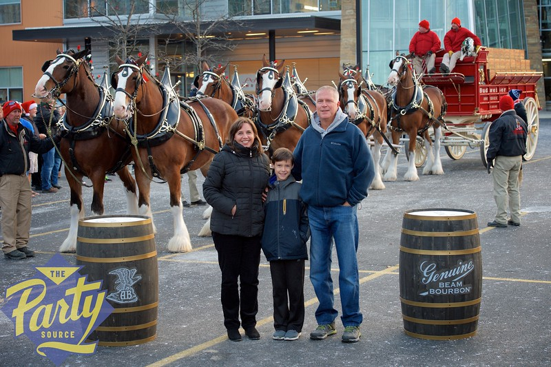 Clydesdale Portraits 268.jpg
