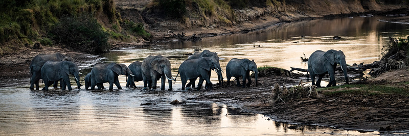 The Herd crossing the River