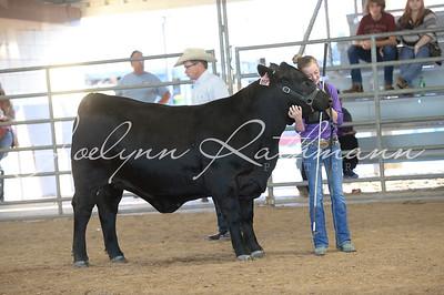 Open Cattle Ringshots - 2