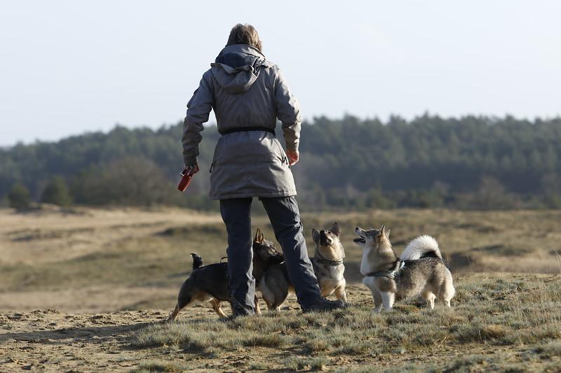 Images from folder 2020-01-19-Kootwijk