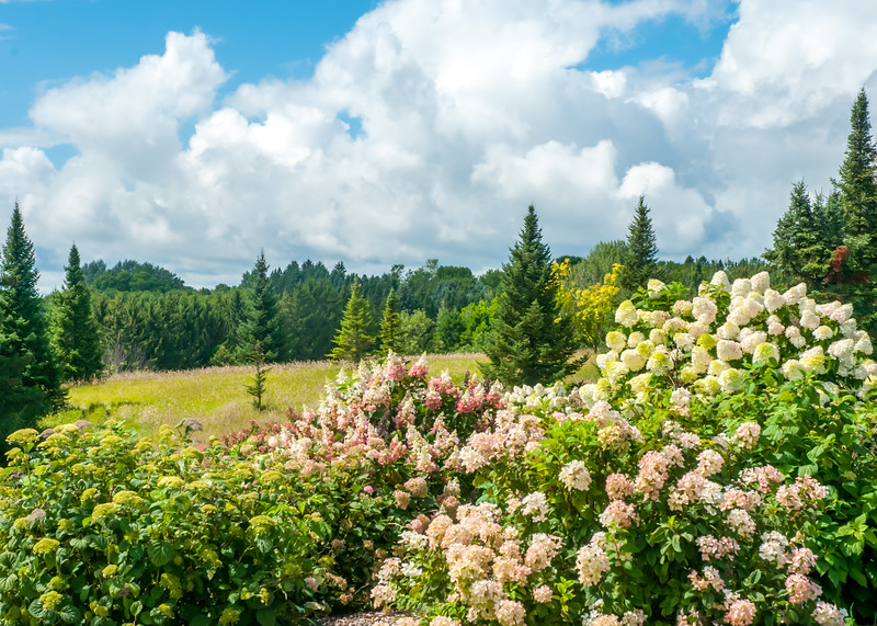 Arboretum_2017Aug10_1-9886.jpg