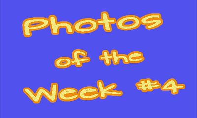 Photogs Photos of the Week #4