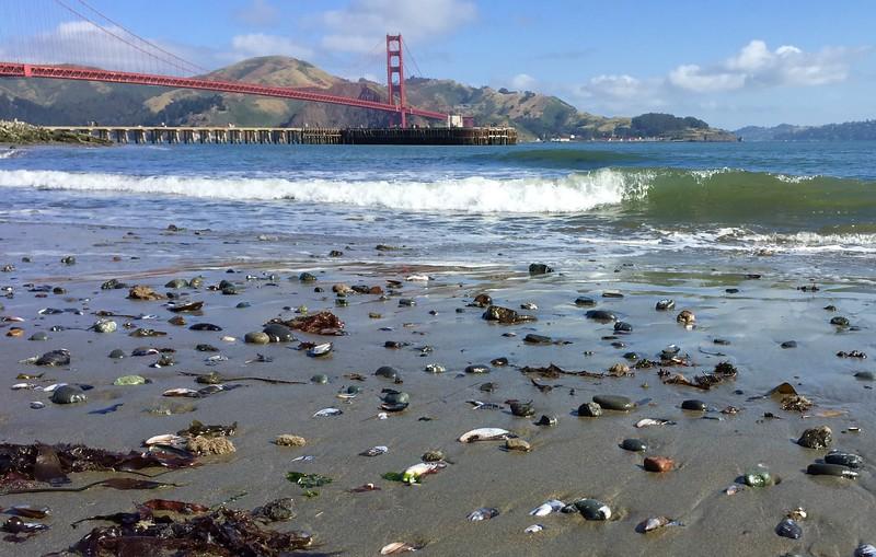 Chrissy Field Beach View of the Golden Gate Bridge