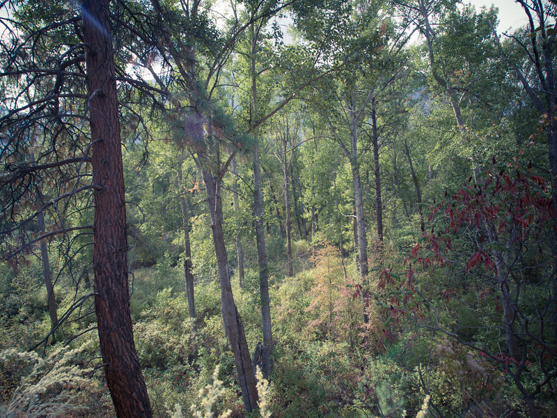 forbidden fruit forest.jpg