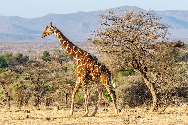 Kenya 2015-01442.jpg