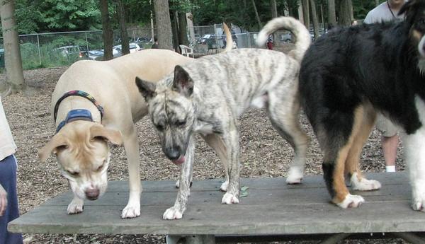 PICS JUNE 17::SPENCER (pup boy)