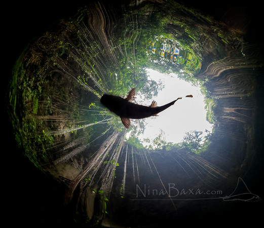 Yucatan_Cenote