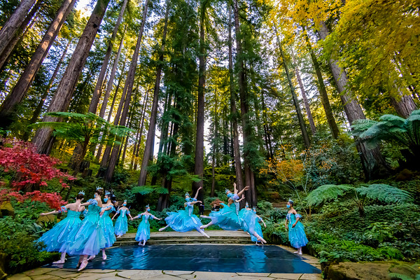 San Jose Dance Theatre Nutcracker 2020