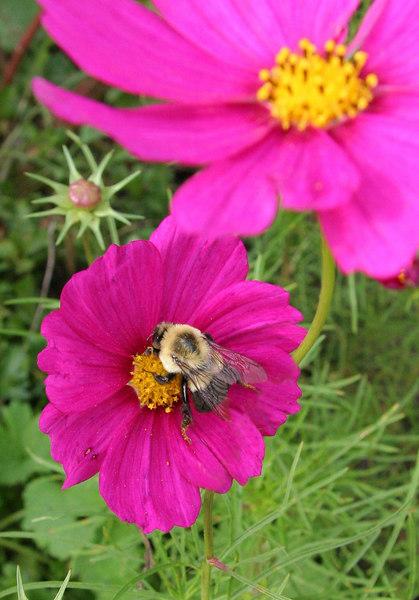 Bee 1_2.jpg
