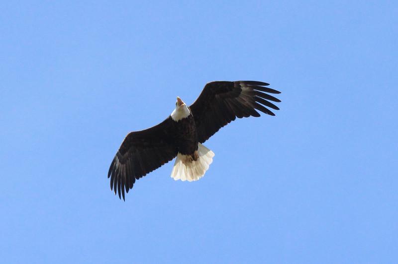 Eagle%2003-X3[1].jpg