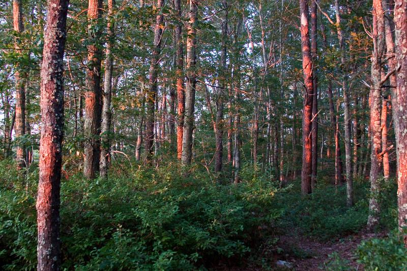 Cape woods.jpg