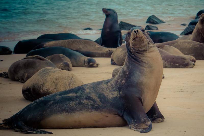 sea lion looking at me.jpg
