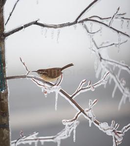 Winter Birds 2013/2014