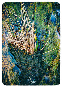 Mucky Creek