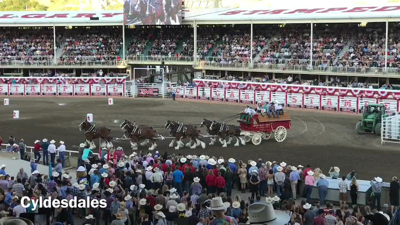 Clydesdales.mp4