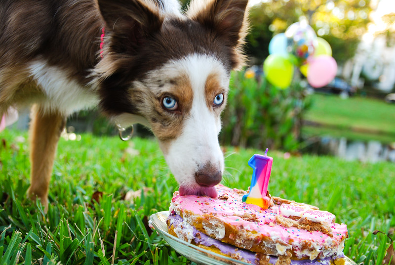 Lady eating cake II.jpg
