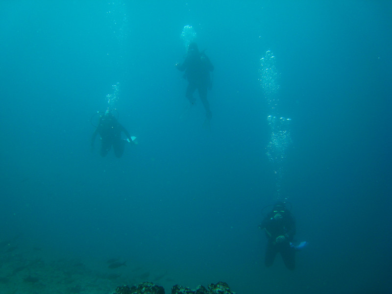 Diving in the Galapagos (6 of 392)