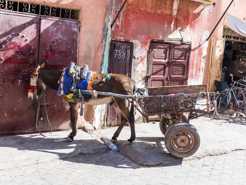 Marruecos-_MM10398.jpg