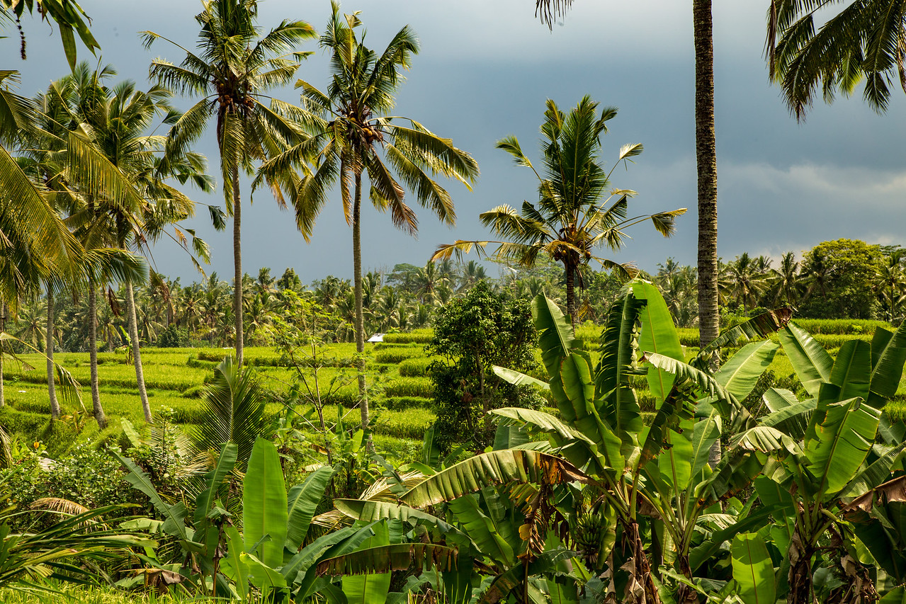 View of Rice Paddy from Ubud Villa Rental