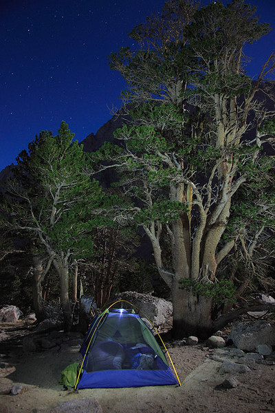 Foxtail pines and backpacking tent under starry night sky in the John Muir Wilderness, Eastern Sierra.