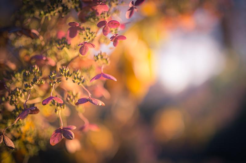 Autumn Intonation