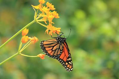 blooms 'n' butterflies