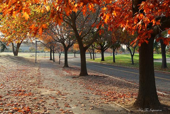 Fall Colors of Evergreen -  San Jose, California