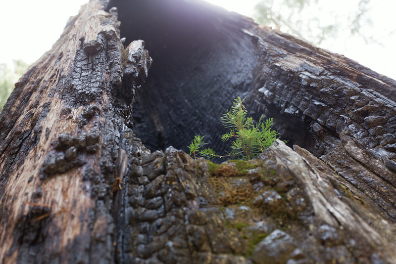 Sequoia_0519.jpg