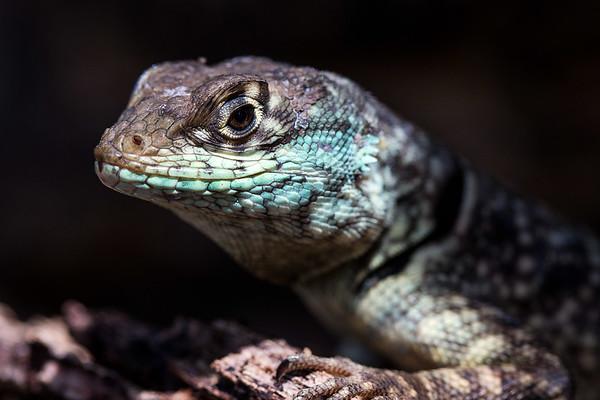 Wildlife Shots - Brazil