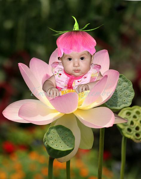 sacred_lotus_11x14.jpg