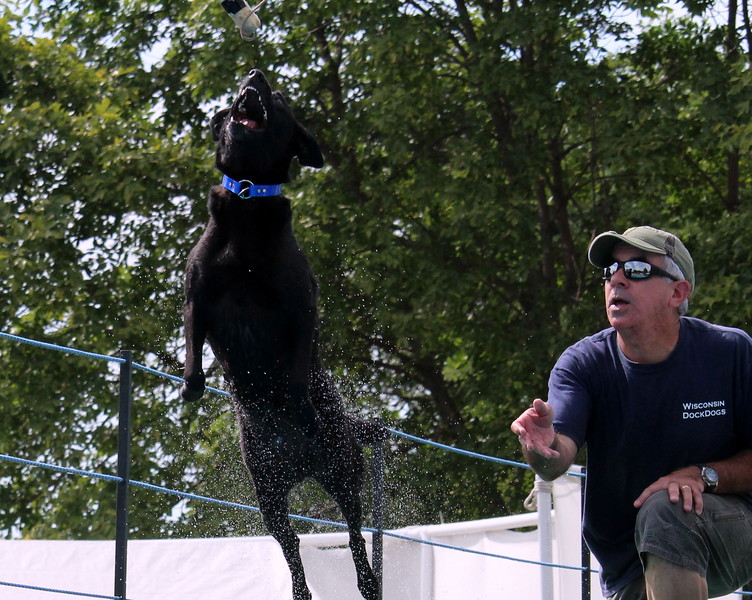2015.8.6 Winnebago County Fair Dock Dogs (82).JPG