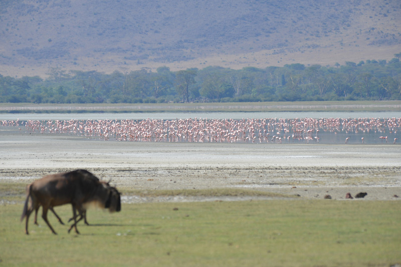 East Africa Safari 415.jpg