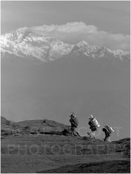 Stripping the land bare, women gather firewood in the shadows of Kanchenjunga, the Himalaya's third highest mountain. Gnoom, India.