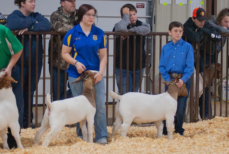 kay_county_showdown_goats_20191207-25.jpg