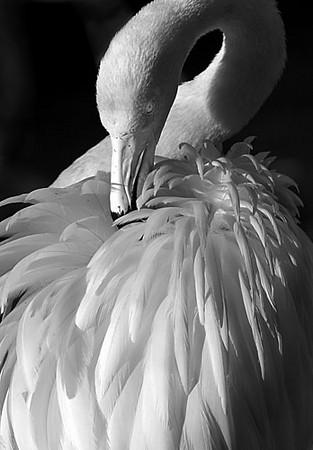B&W Flamingo.jpg