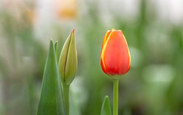 Hidden Portfolio Flowers