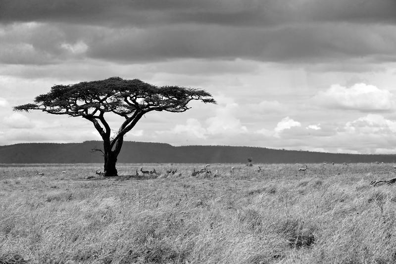 Landscape-01.jpg