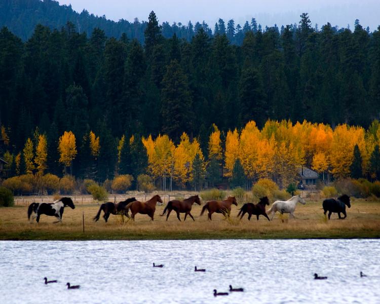 BBR-horses-running-KateThomasKeownKTK_DSC0043.jpg