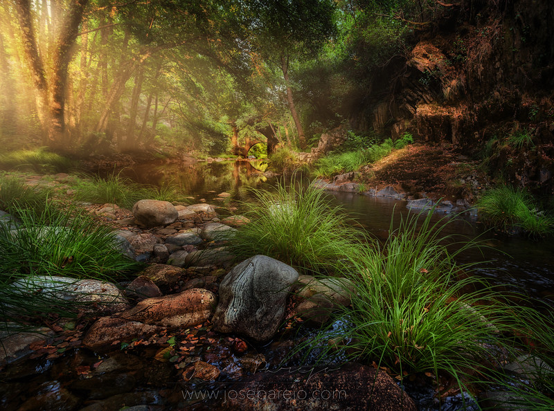 bosque 2 enfocado.jpg