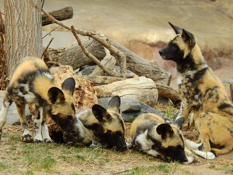 Denver Zoo 2018 (3027).JPG