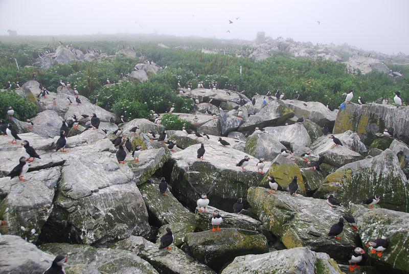 Machias Seal Island Trip - 089