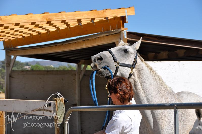 EB&Horses-032.jpg