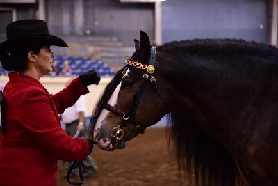35 Gypsy Champion Stallion