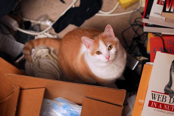 Windypundit Catblogging 2009