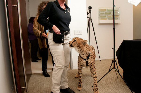 Cheetah Foundation 2011