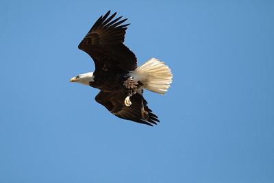 Eagles & Birds