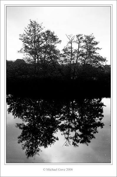 2 trees and a river (61667434).jpg