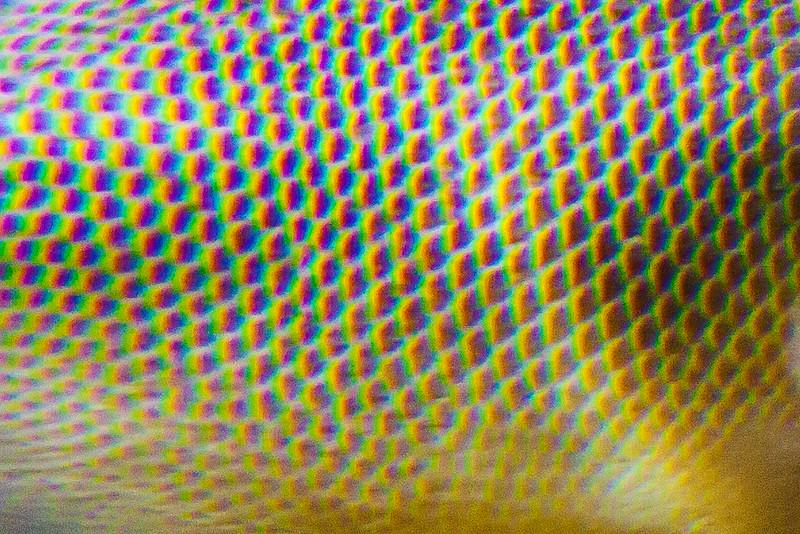 abstract-texture_007.jpg